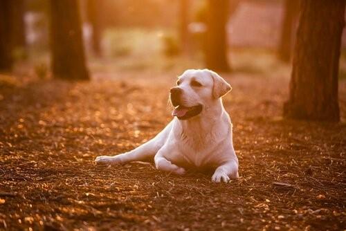 8 Dinge, die du von deinem Hund lernen kannst