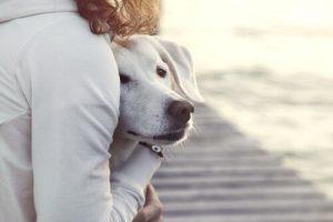 Während eines Gewitters - Frau umarmt Hund