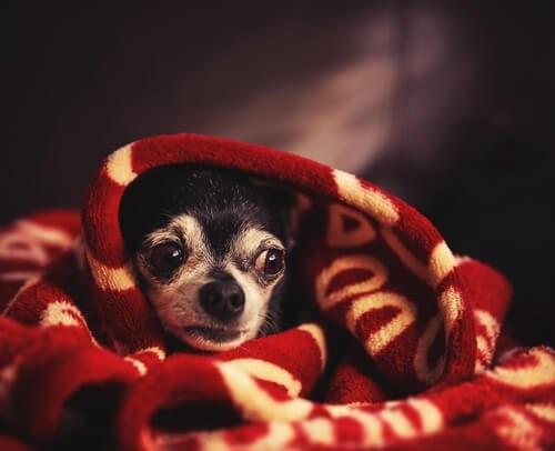 Wie man seinen Hund während eines Gewitters beruhigt