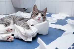 Warum kommen Katzen gerne mit ins Badezimmer