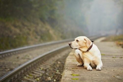 Warum setzen manche Besitzer ihr Haustier aus?