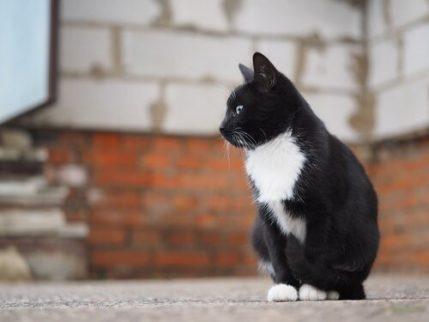 Warum setzen manche Besitzer ihr Haustier aus - Katze