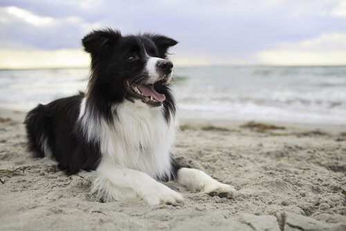 Wie man einem Hund beibringt, die Straße zu überqueren - Hund am Strand