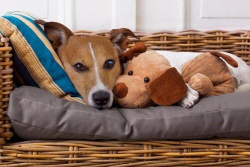 Wusstest du, dass wir unseren Haustieren Krankheiten weitergeben können?