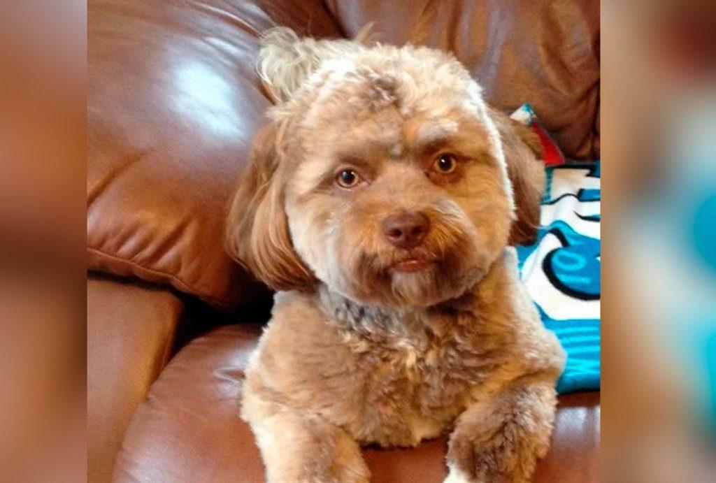 Yogi, ein Hund mit Menschengesicht