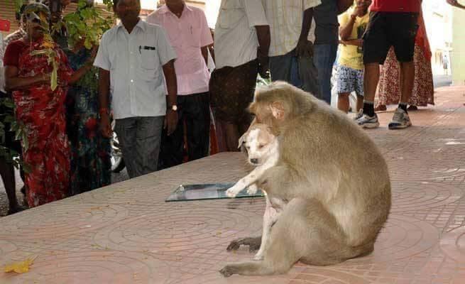 Affe adoptiert Straßenhund