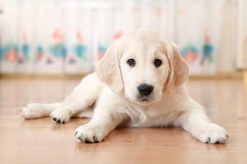 Nudenamen für Hund wählen