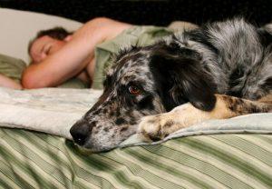 Besser schlafen mit dem Hund