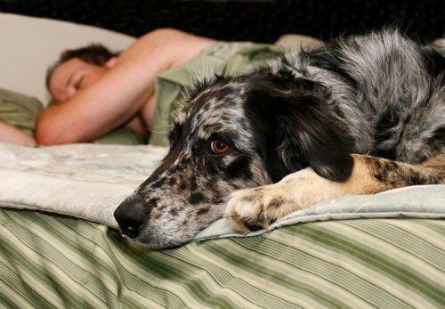 Willst du besser schlafen? Dann adoptiere einen Hund!