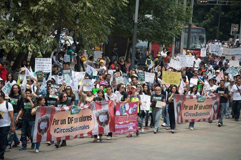 Demo für Tierschutzgesetze