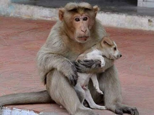Der Affe, der einen Straßenhund adoptierte