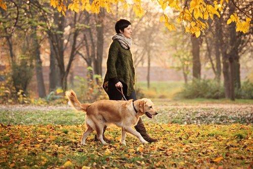 Der beste Freund beim Spaziergang