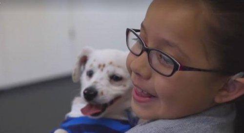 Hund kann Diabetiker warnen und hilft Mächen