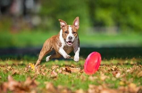 die Intelligenz deines Hundes - Hunde spielt mit Frisbee