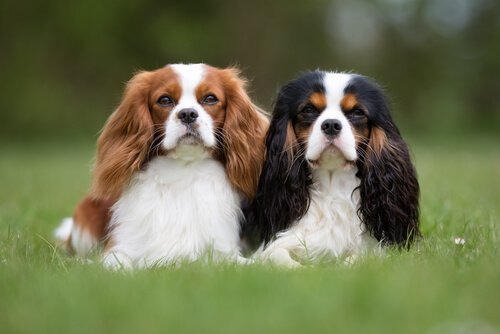 Wenn du eine viel beschäftigte Person bist, kannst du einen dieser Hunde halten