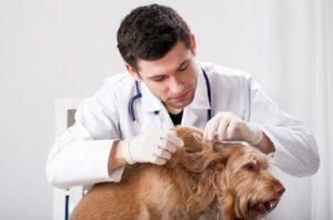 Entwurmung und Entfernung von Parasiten beim Hund