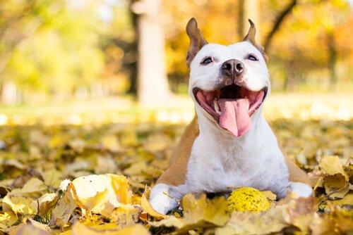 Wie kannst du deinen Hund glücklich machen?