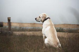 Wer einem Straßenhund ein Zuhause gibt, hat einen guten Freund