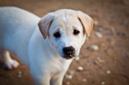 Ein Hund ist fürs Leben!