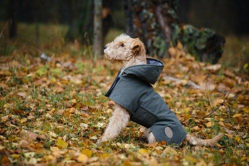 Lerne, wie du deinem Hund einen Regenmantel machen kannst