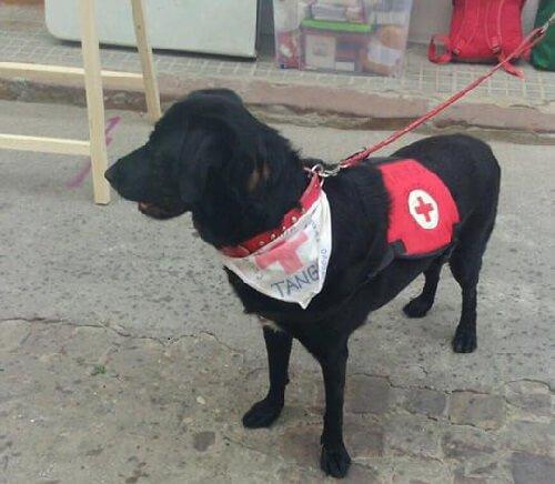 Ein misshandelter Hund stellt Therapiehilfe