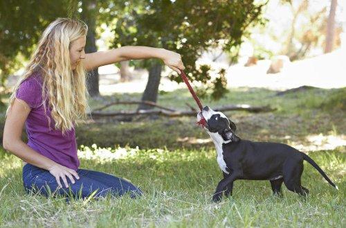 Hund glücklich machen durch Spiel