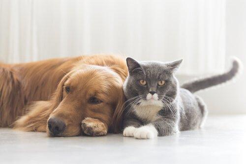 Sieben gefährliche Krankheiten für dein Haustier