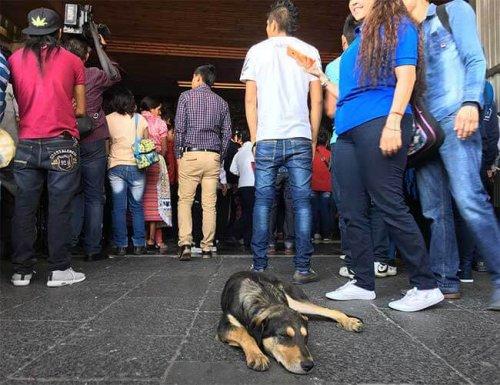 Zahlreiche Gläubige verlassen ihre Hunde vor einer Basilika
