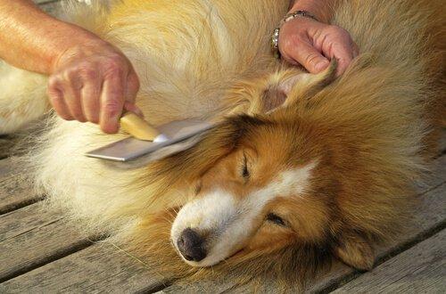 Hund genießt unbewusst