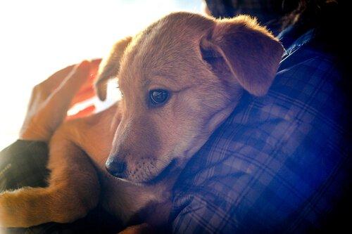 Rettung durch den Geruchssinn der Hunde