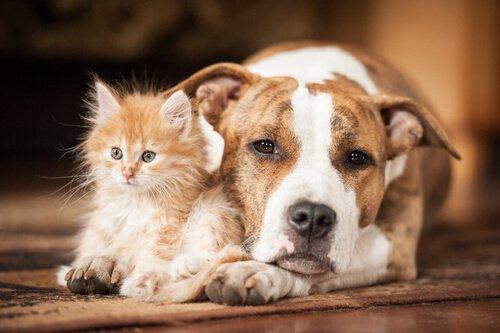 Katzen und Hunde können gefährliche Krankheiten bekommen
