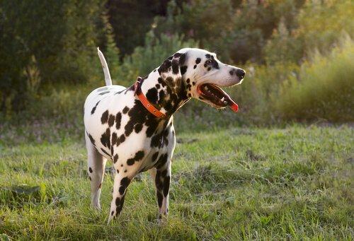 Schönheits-OPs bei Hunden verboten