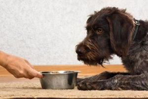Hund trauert wegen Tod eines Haustiers