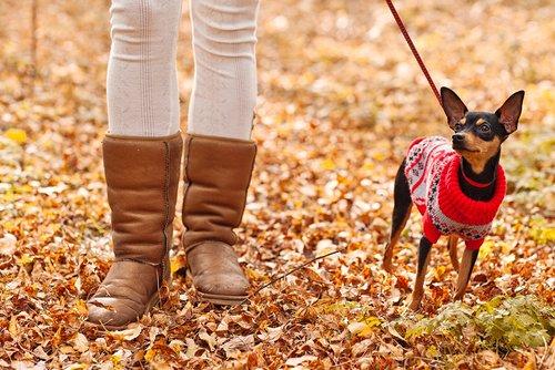 Schicker Hund im Winter