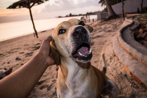 Hund liebt Besitzer