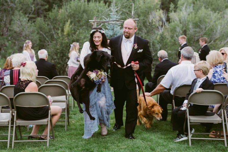 Hund mit Hirntumor auf der Hochzeit
