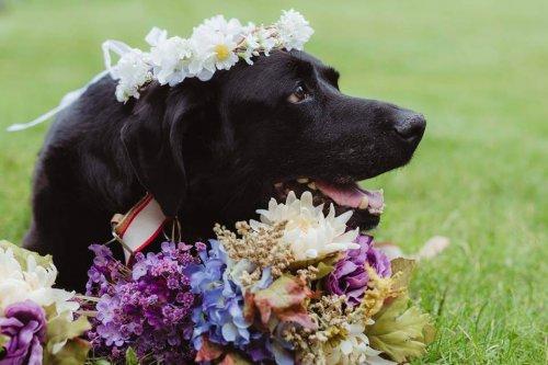 Hund mit Hirntumor