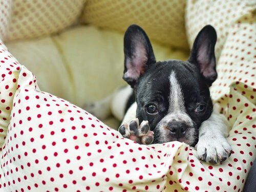 Externe Parasiten im Hundebett