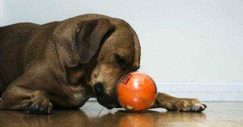 PlayDate: Modespielzeug für Hunde