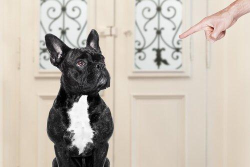 Problemverhalten bei Hund stoppen