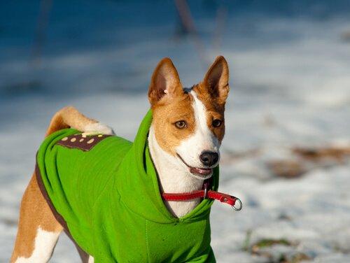 Hund mit Regenmantel