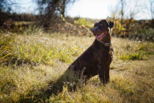 Wie kann ich meinem Hund den Rückruf beibringen?