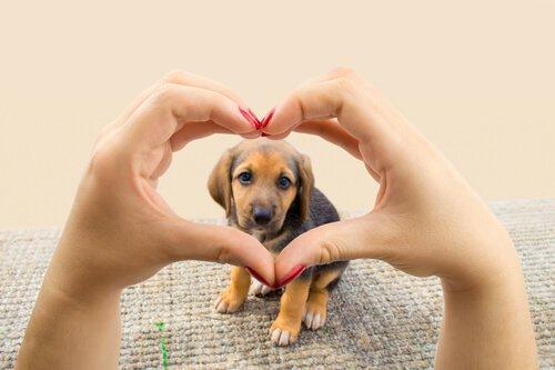 Das einzige Ziel deines Hundes: dir sein Herz zu schenken!