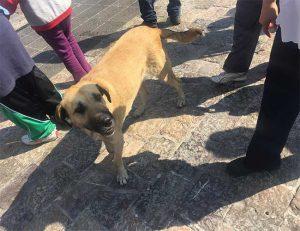 Hunde werden vor der Basilika ausgesetzt
