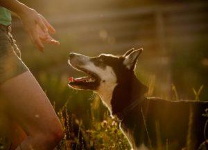 Warum will dich dein Hund beißen?