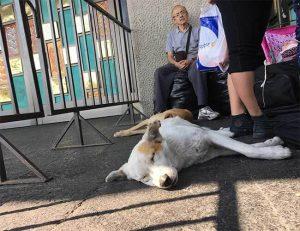Hund vor der Basilika von Guadalupe