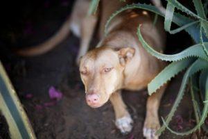 Hund zwischen Aloe vera