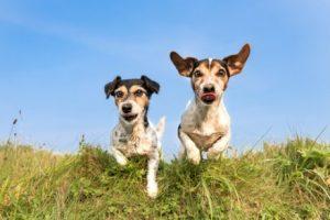 Gönne deinen Hunden einen abwechslungsreichen Spaziergang!