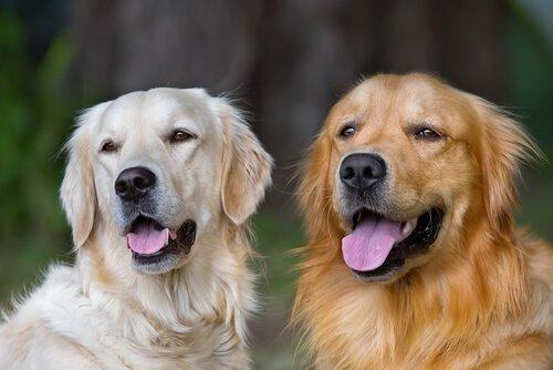 Hunde verändern dein Leben