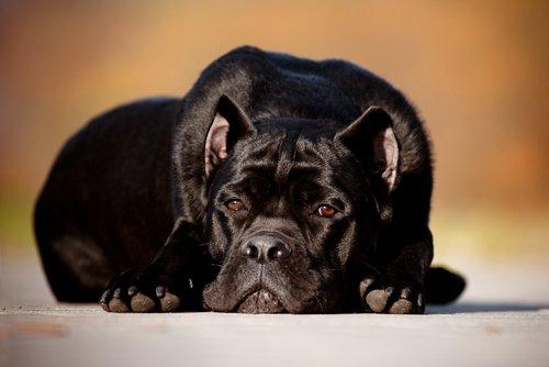 Hunde sind traurig, wenn sie unter Verlustangst leiden